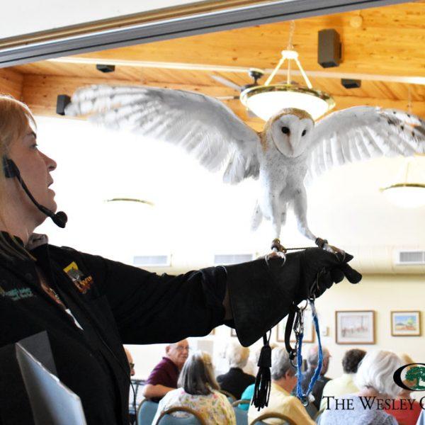 Silent Wings presentation at Saratoga Senior Center.