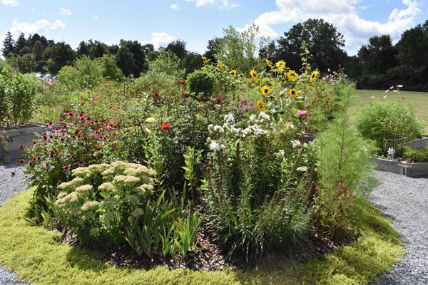The Wesley Community Garden