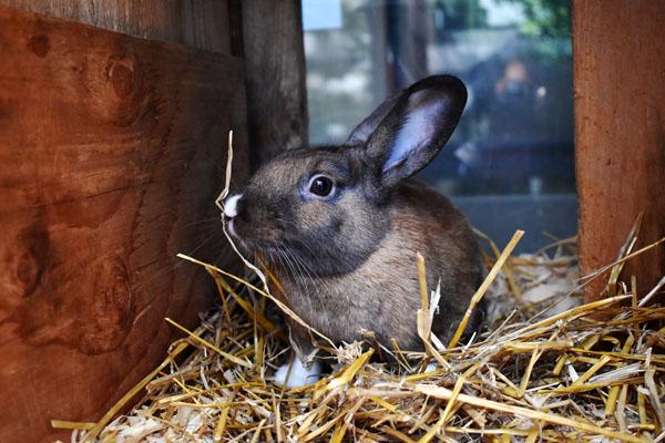 Pop the Bunny