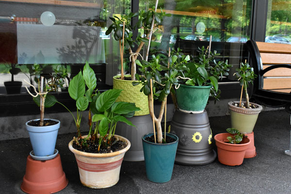 Photo of the Embury Apartments container garden.