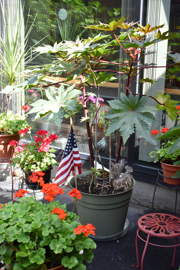 Beautiful Green Plantings with American flag
