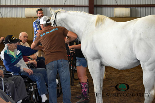 Seniors interacting with a white horse and its trainer.