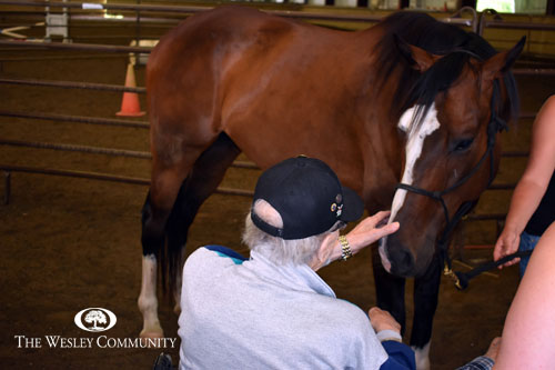 Senior interacting with a horse.