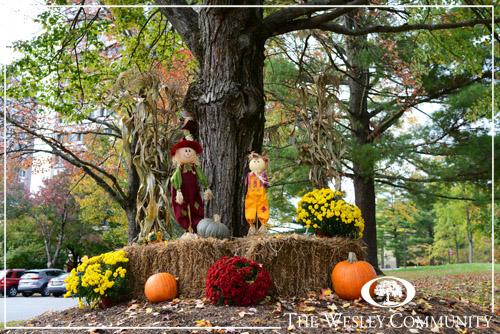 AN autumnal display beneath a tree.