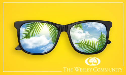 A picture of sunglasses with tropical plants reflected in them.