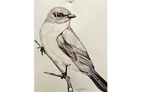 chickadee drawing