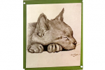 sleeping cat drawing