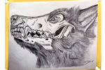 wolf and skull drawing